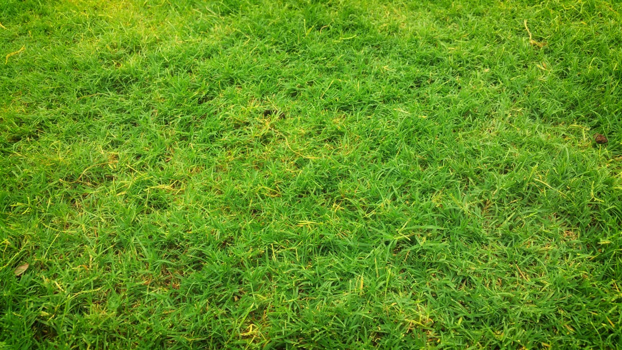 artificial grass in Adelaide