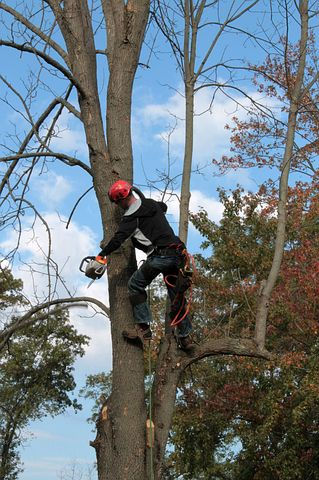 arborist in Sydney while cutting a tree